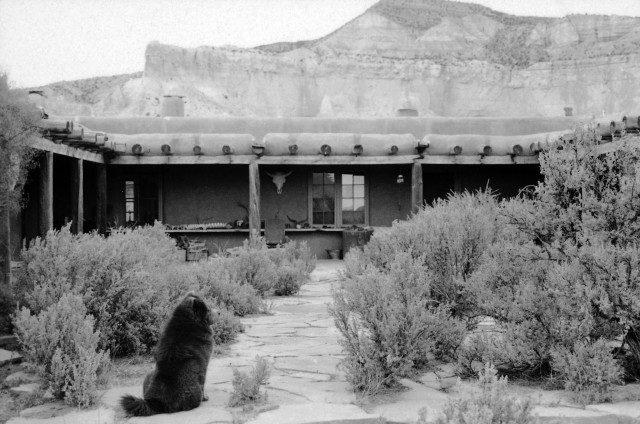 고스트 랜치 하우스, 오키프가 키운 여러 차우 가운데 한 마리가 마당에 앉아 있다. 1966.Photo by John Loengard / The LIFE Picture Collection / Getty Images