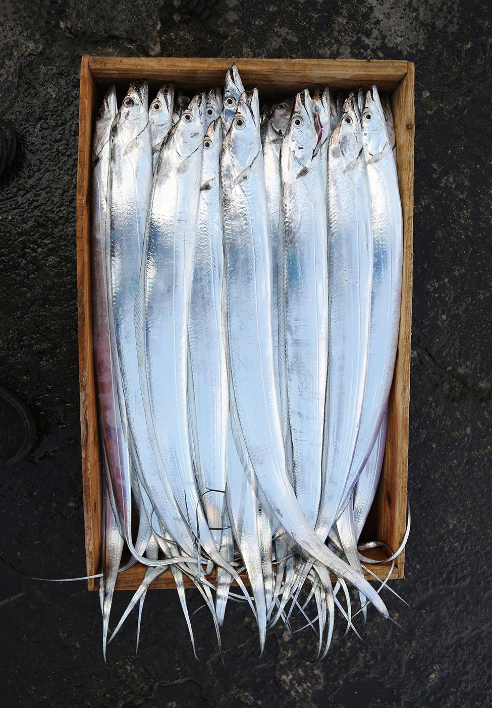 이 계절에는 갈치가 먹은 온갖 바다 생물의 아미노산이 응축된 살점의 맛을 놓칠 수 없다.