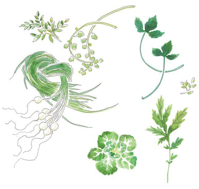 나물 먹는 봄 - 하퍼스 바자
