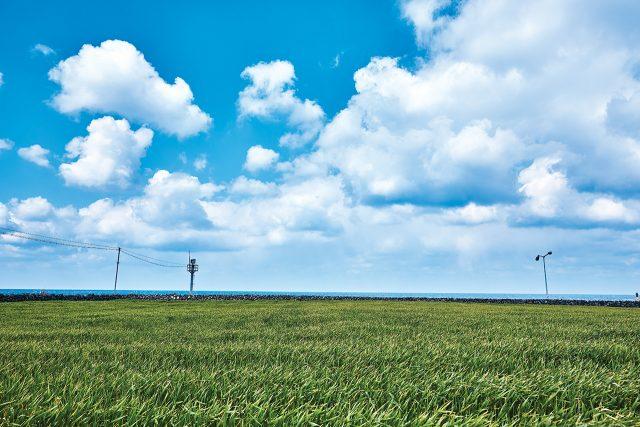 올해의 색 '그리너리'의 실사판 청보리 밭