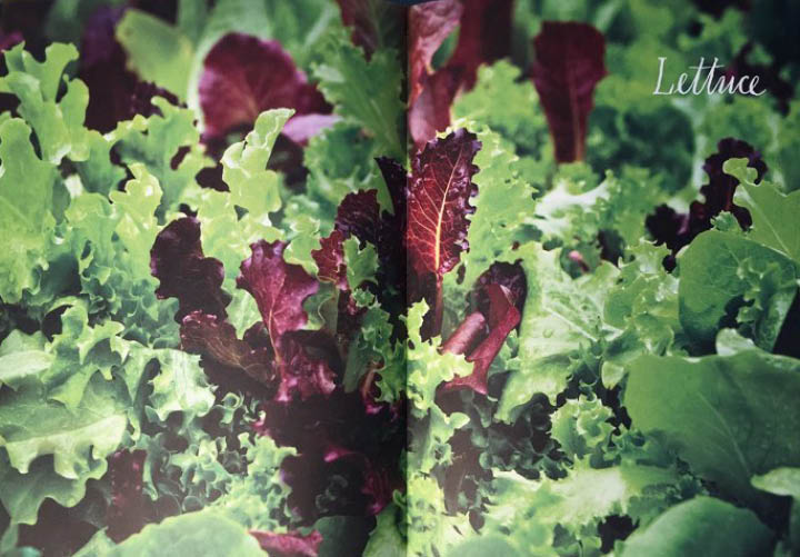 이 책은 매일 먹고 즐기는 식재료가 어떻게 만들어지는지 알고 싶었던 뉴요커의 아름다운 결과물이다.