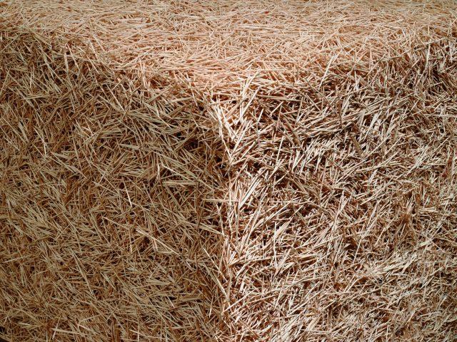 'Untitled(Toothpicks)', 2004