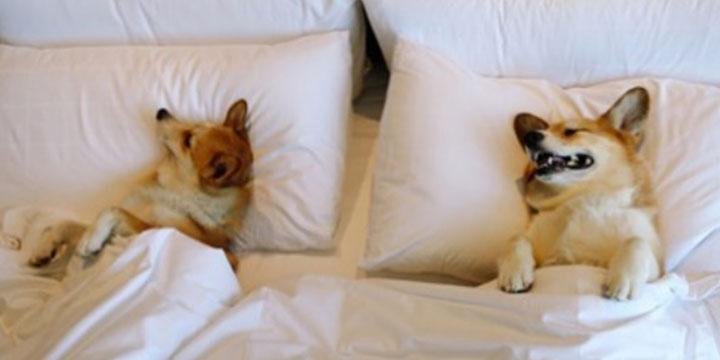 혼자 두지 않을 거야! 내 사랑 '댕댕이'와 밤새 '호캉스'를 누릴 수 있는 전국의 호텔들.
