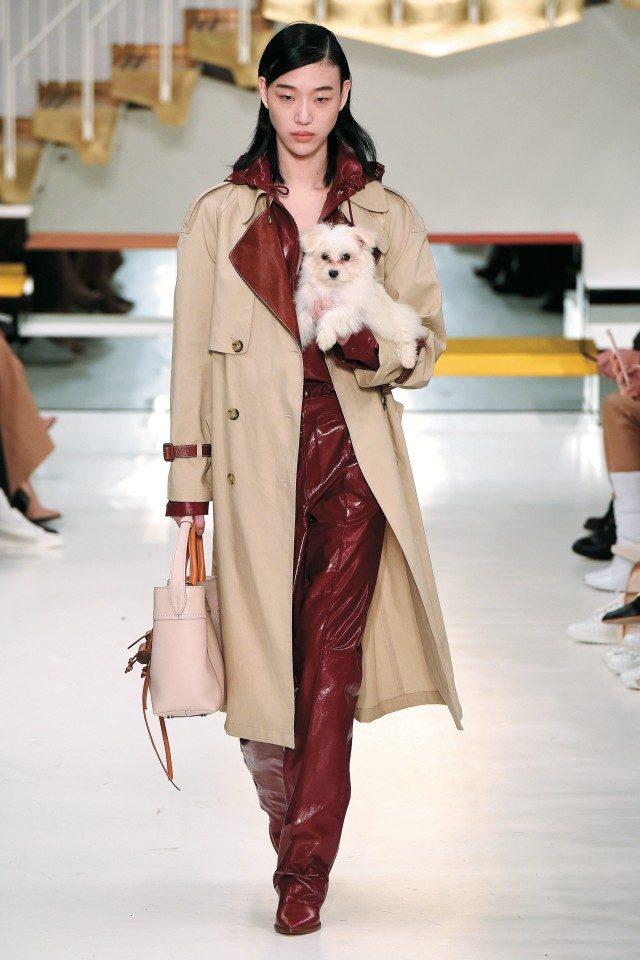 사랑스러운 강아지와 함께한 모델 최소라의 워킹!