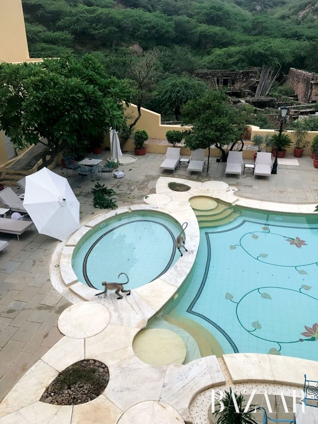 원숭이가 뛰어놀던 호텔 수영장.
