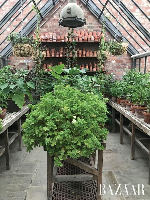 실내 온실에서 키우고 있는 식물들.