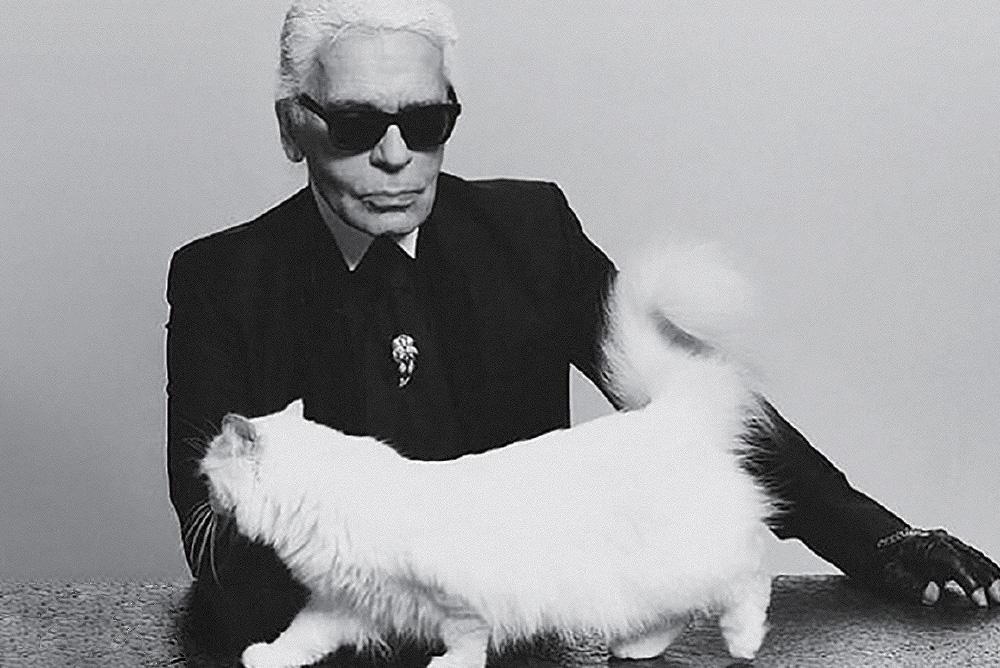 인생의 동반자, 고양이 슈페트.