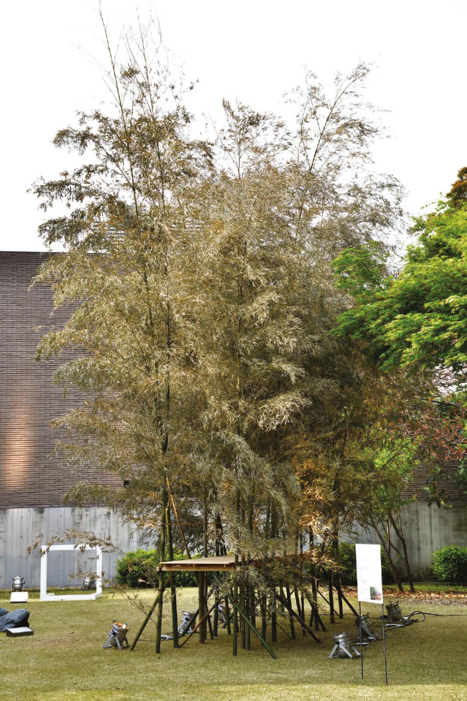시게루 반, 'Bamboo Passage', 2019, Mock-up scale: 1/2, 500×100×600cm.