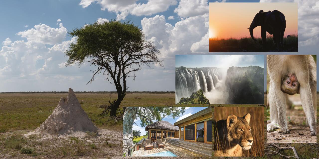 잘생긴 코끼리, 재잘거리는 원숭이, 우아한 기린, 날렵한 표범들이 경외심을 불러일으키는 아프리카 사파리에서.