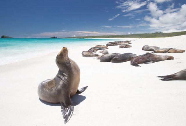 갈라파고스의 바다사자들.